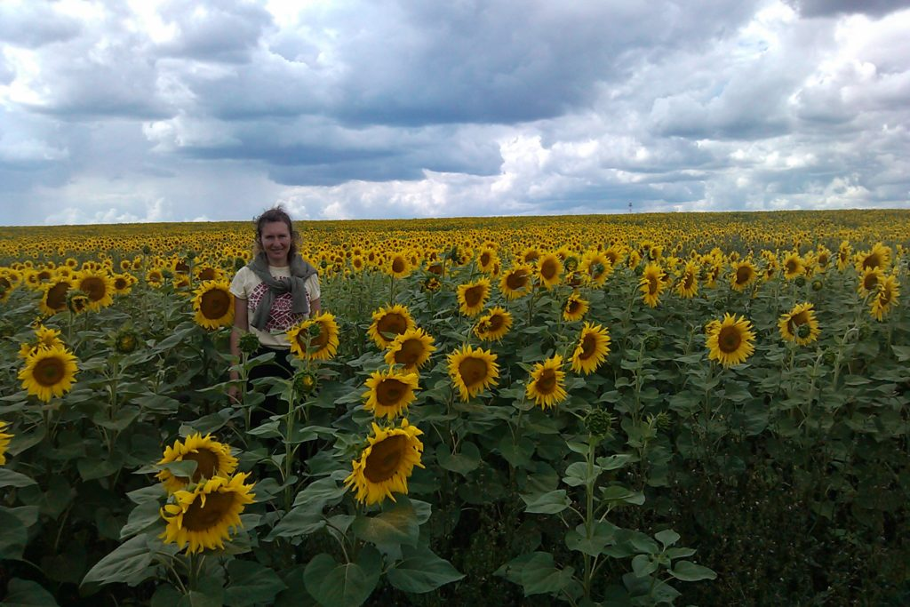 We Found the Russian Sunflowers this year…