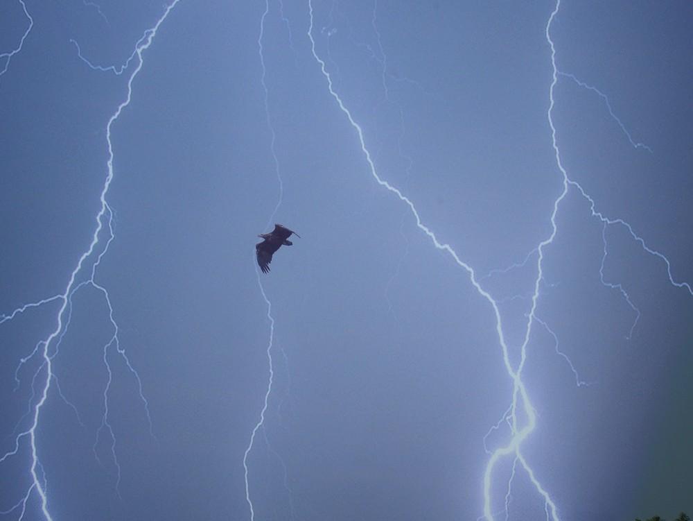 lightning_bird
