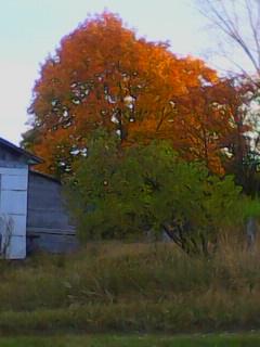 It is Autumn in Russian Village…