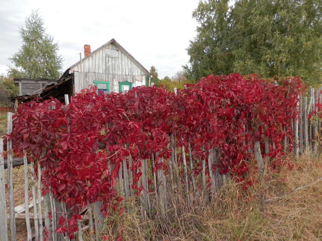 wood vine