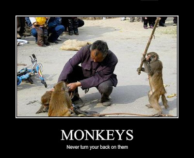 never-turn-your-back-on-monkeys