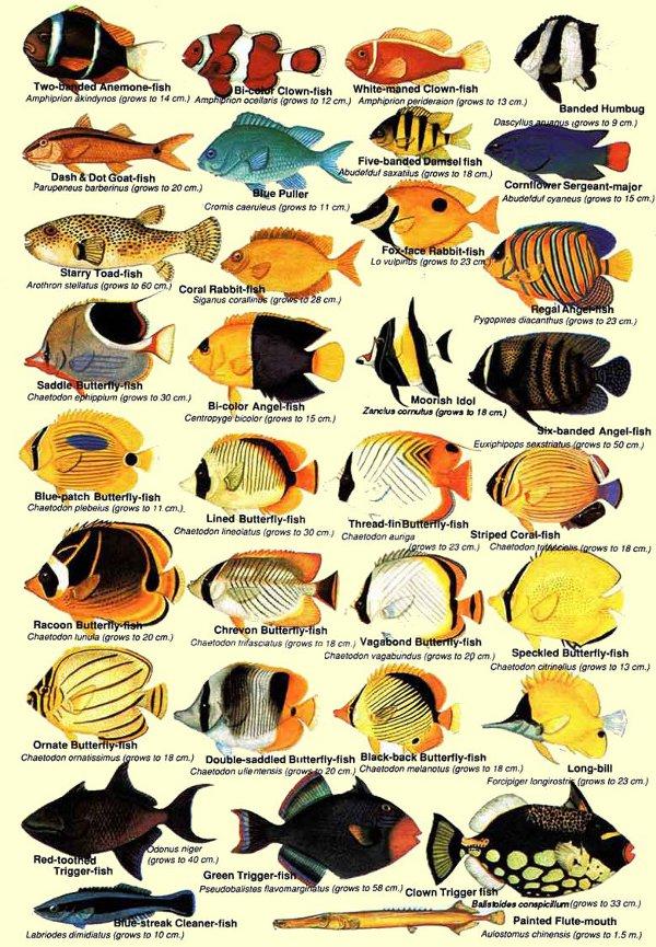 Fish_Chart