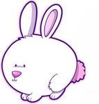 Fat Rabbit!