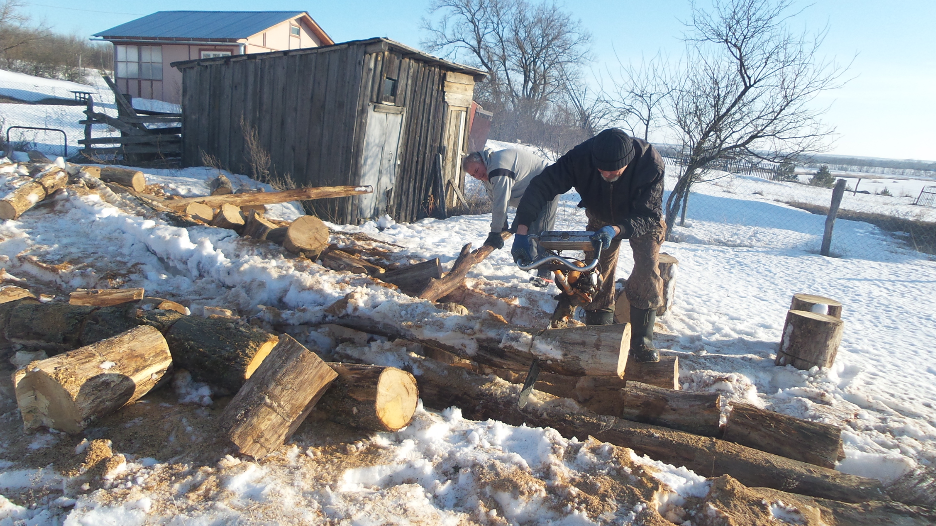 Vova and I cutting up the Oak Trees…