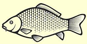 Svetochka attacked the fish I steamed…