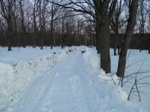 Plowed the woods