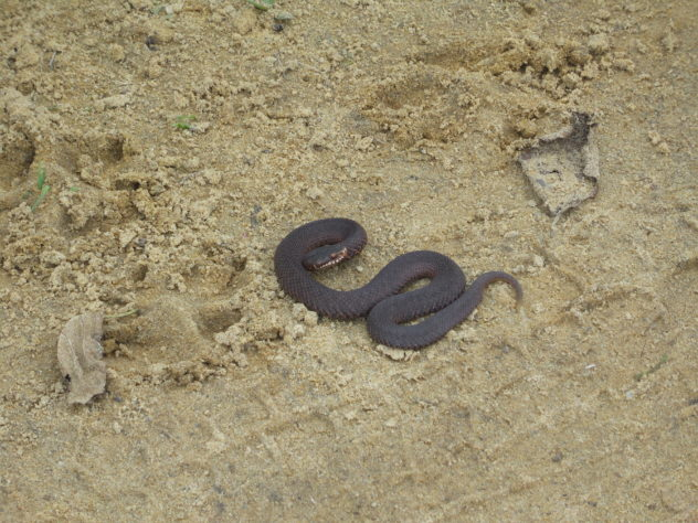 Sveta always finds snakes...