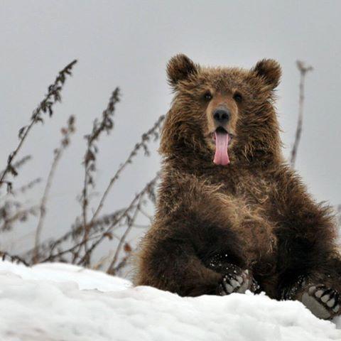 Masha and The Bear – Russian Animation…